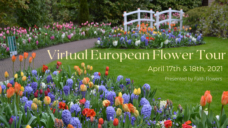 European Virtual Flower Tour yellow text_small